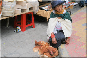 Woman Selling Live Chickens at the Saturday Market, Otavalo, Ecuador
